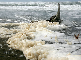 Sea foam at Ocean Beach in San Francisco -1 on 3-25-11